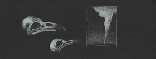 "Crow and Raven Worry About Plaza Curve   Copyright Terri Myers Wentzka 2015, all rights reserved.  White pencil on black paper, 6.75 x 17""  $600"