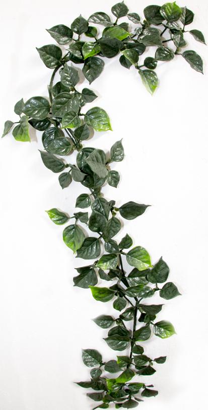 new-ivy-photo-small.jpg