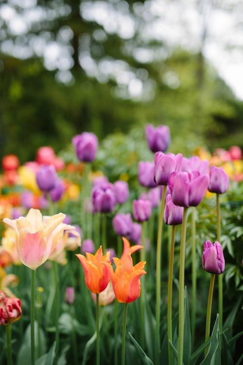Garden Design — Pretty Flowers | Maine