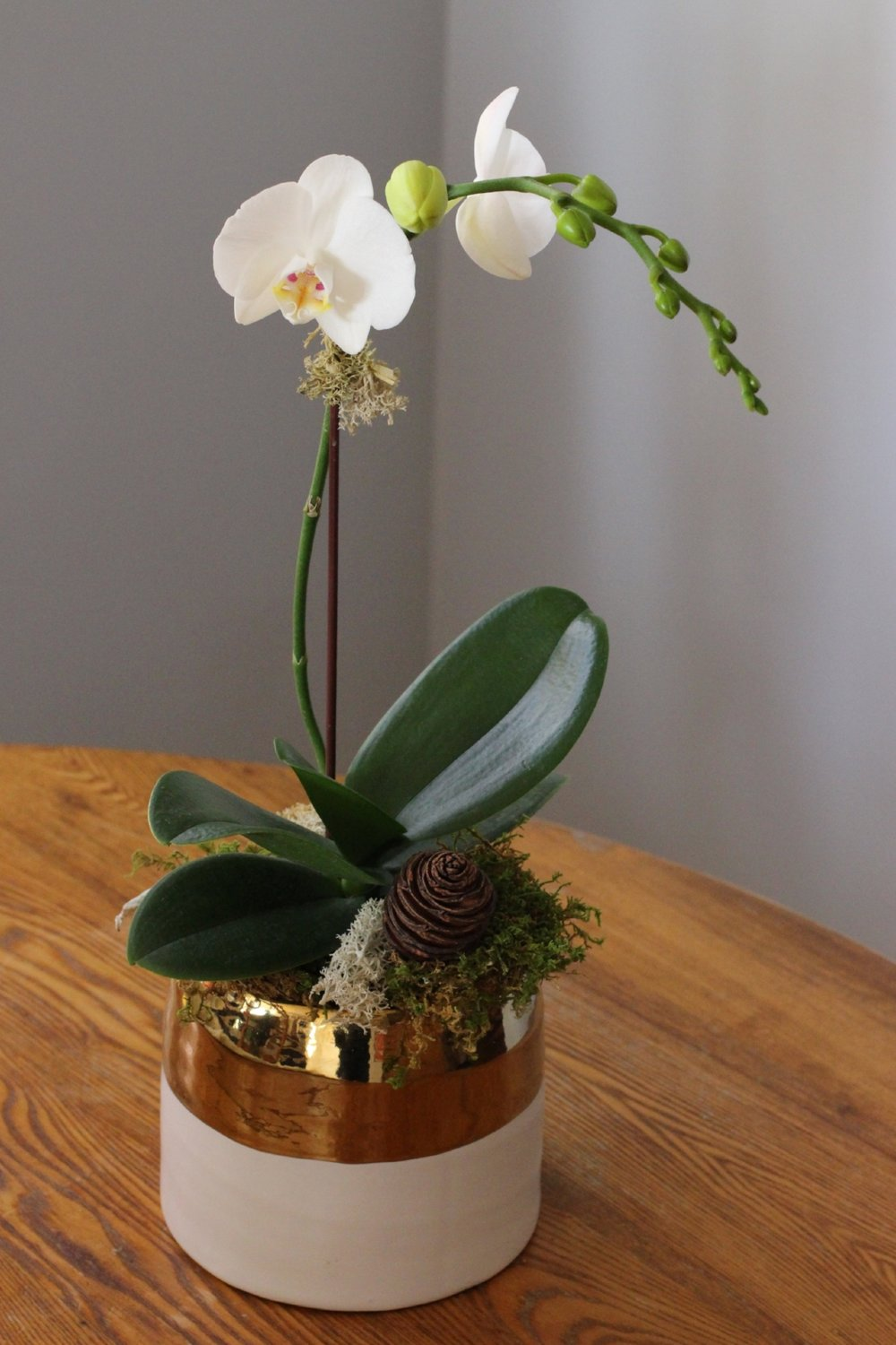 White Phaleanopsis orchid in decorative ceramic container, $75.