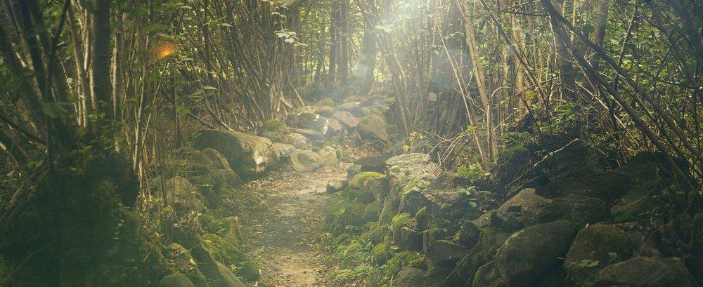 forest-438432_1920.jpg