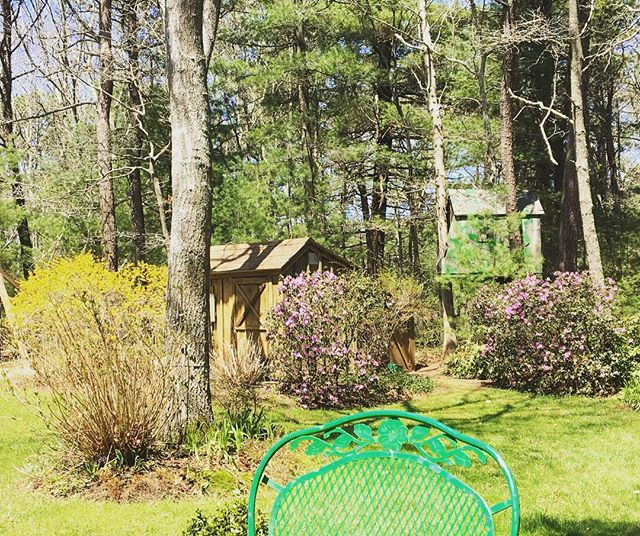 Beautigorgeous backyard moment on this fabulous Cape Cod spring day! #capecodlife #springfinally #backyardgarden #sothankful