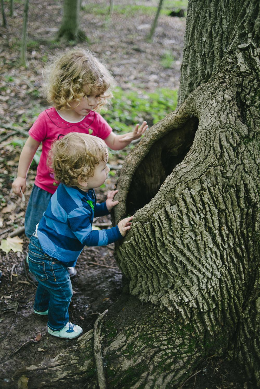 peering-into-tree-1.jpg