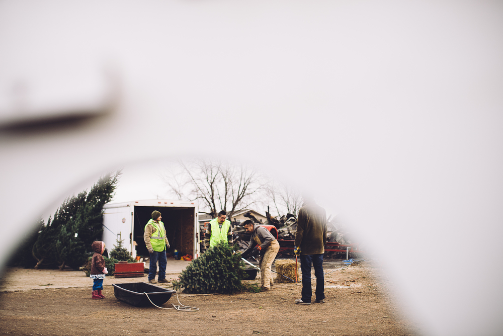 christmas-tree-cutting-12.jpg