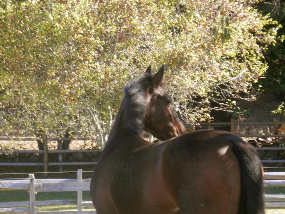 wwfarm-horse1.jpg