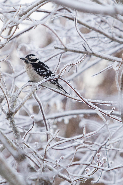 WinterMorning-_V8A37653.jpg