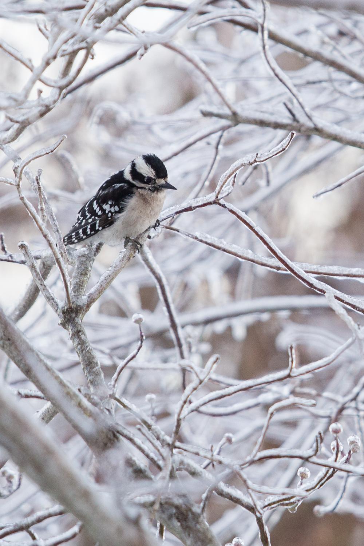 WinterMorning-_V8A37744.jpg