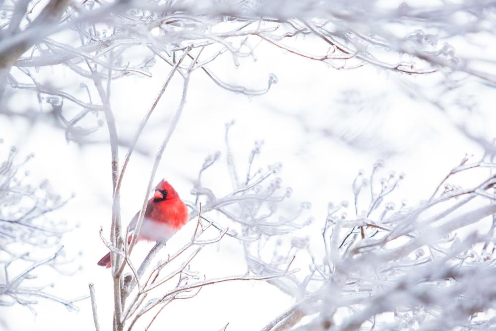 WinterMorning-_V8A37956.jpg