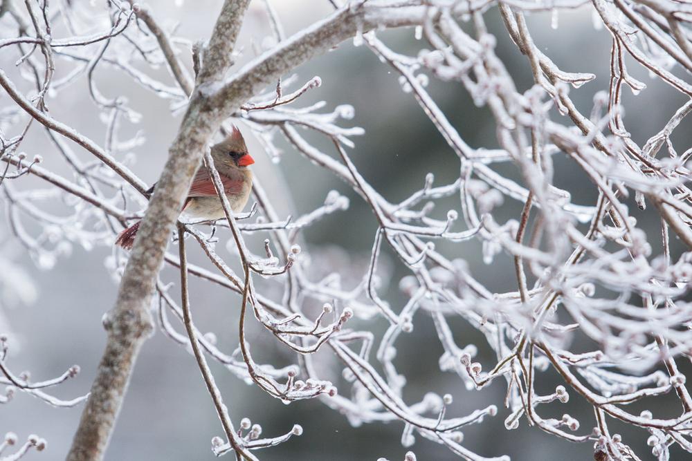 WinterMorning-_V8A37785.jpg
