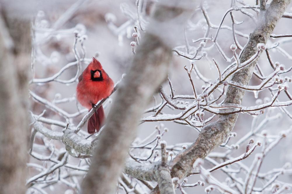 WinterMorning-_V8A38117.jpg