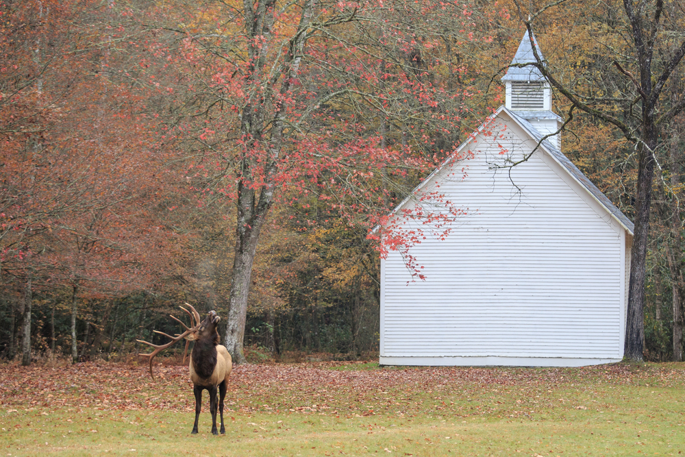 """Amazing grace . . . how sweet the sound . . ."" Here he is bugling and I figured he was just singing a hymn by the old church."