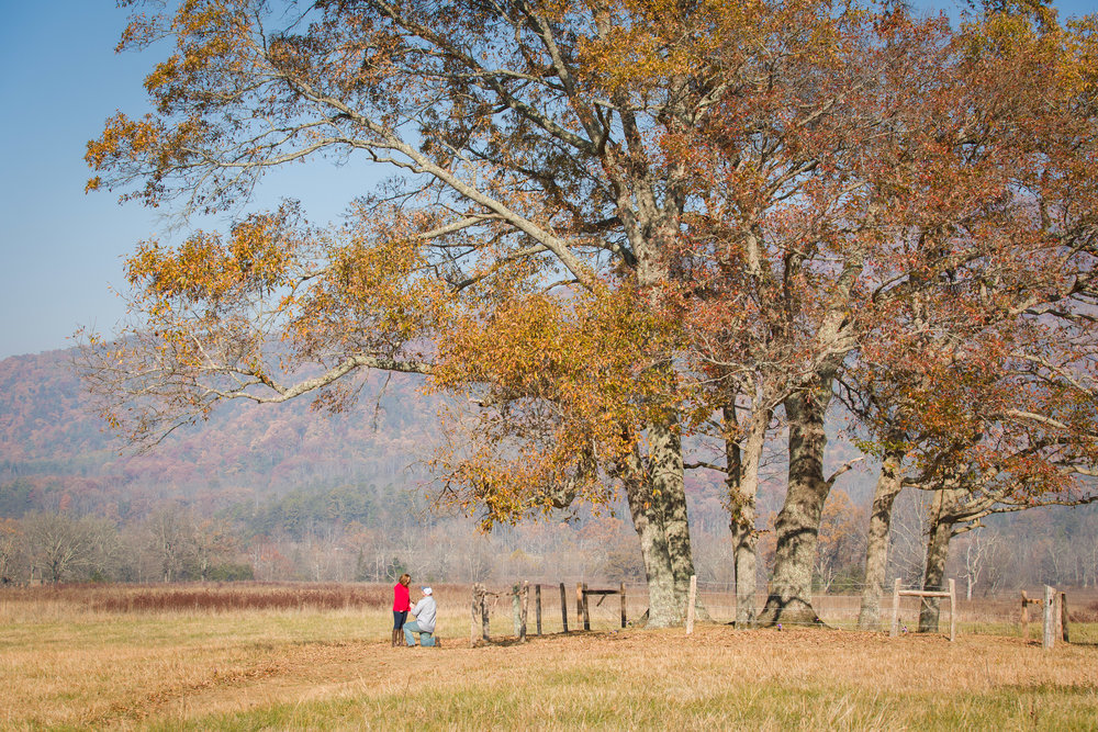 Marriage proposal In Cades Cove, Great Smoky Mountains National Park.