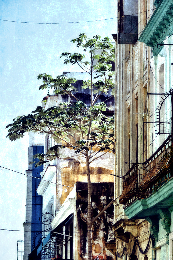 02---A-TREE-GROWS-IN-HAVANA.jpg