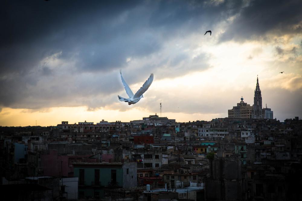 Manny_sunset & homing pigeons.jpg