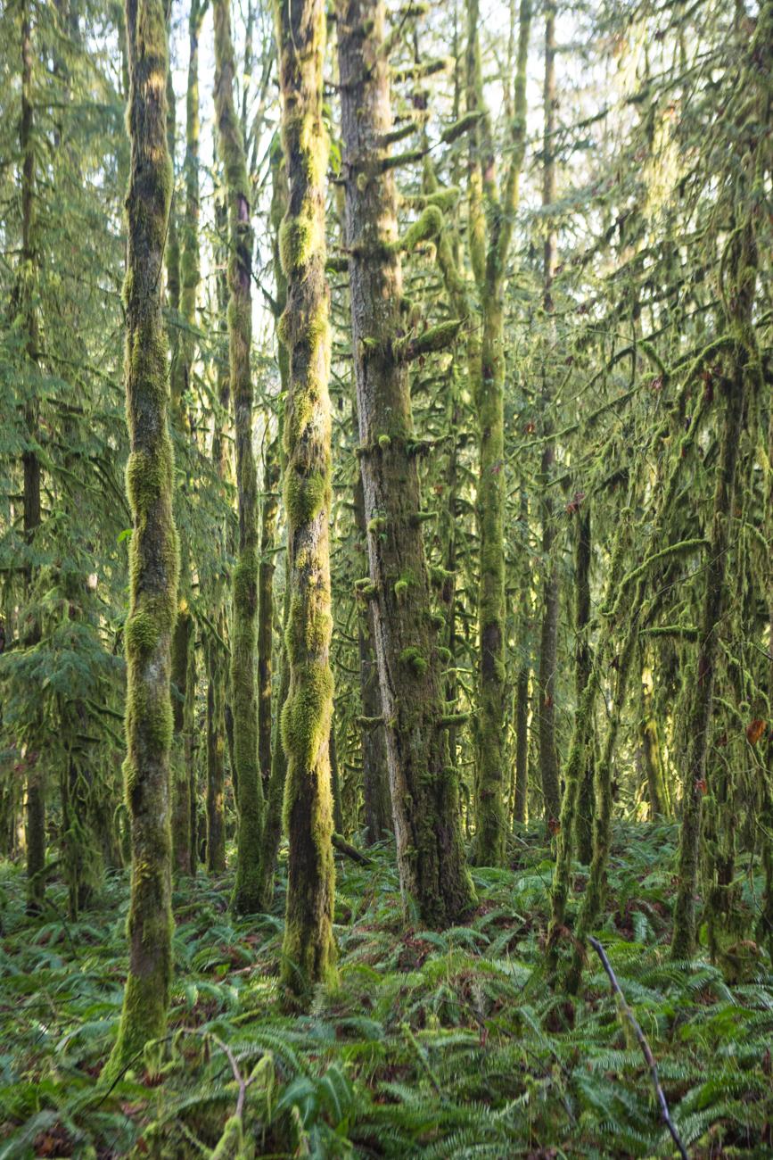 Bolandia-Blogger-Vancouver-Alder-Flats-Hike-Golden-Ears-Park-00400.jpg