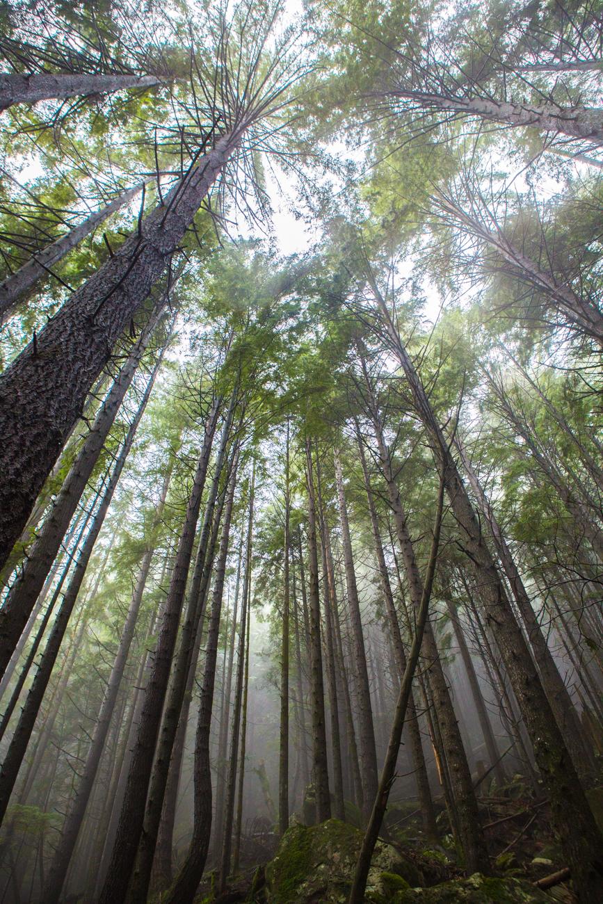 Bolandia-Blogger-Vancouver-Alder-Flats-Hike-Golden-Ears-Park-8106.jpg
