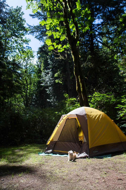 Bolandia_Blog_Vancouver_Saltery-Bay-3003.jpg