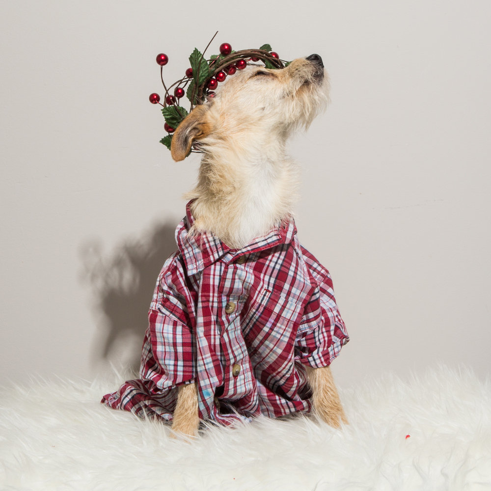 Bolandia Blogger Vancouver - Dog Christmas Costumes-9506