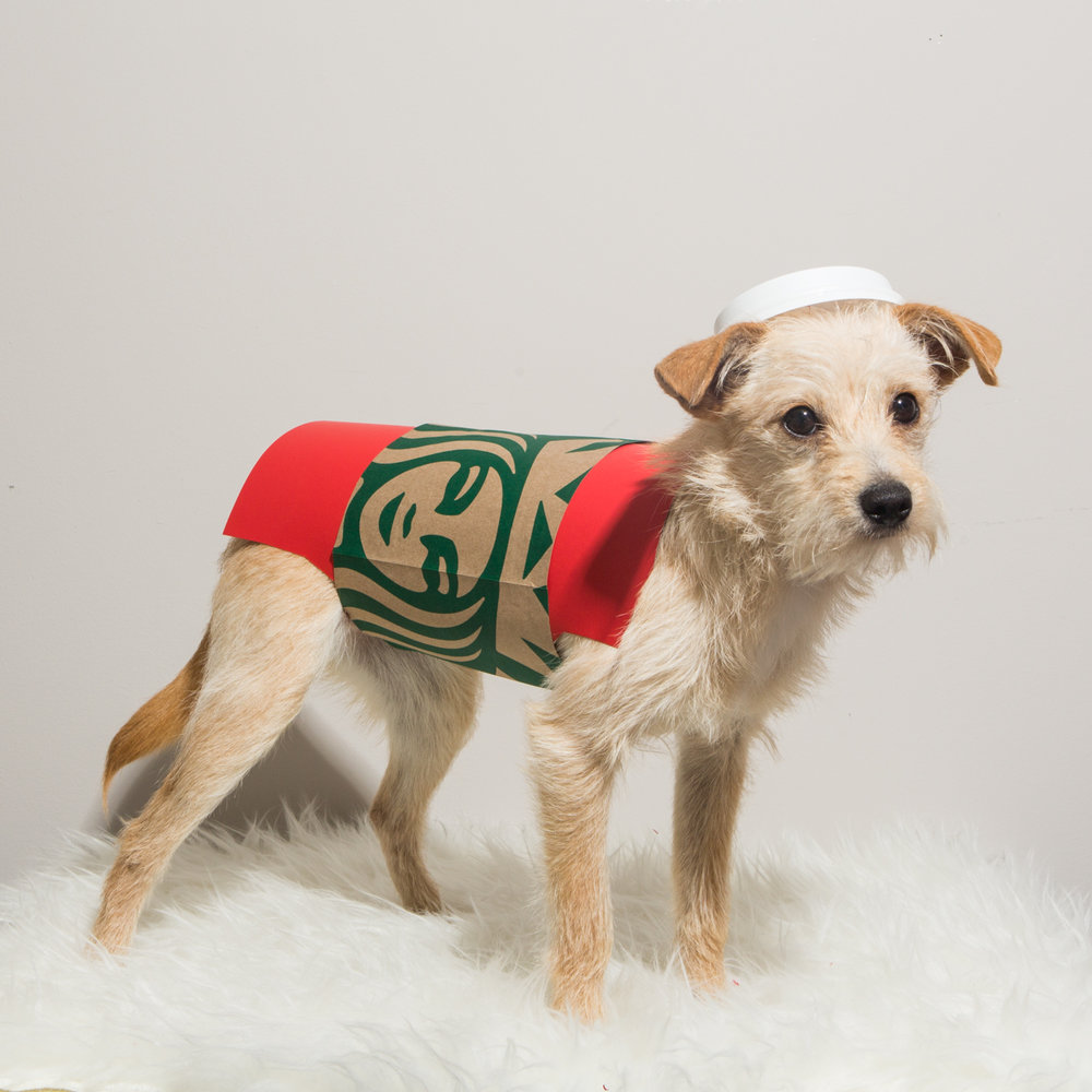 Bolandia Blogger Vancouver - Dog Christmas Costumes-9562