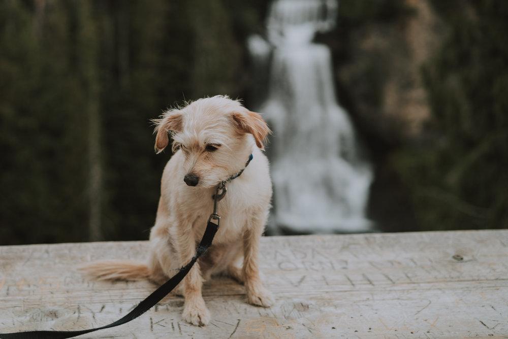 Alexander Falls Whistler-DSC00325.jpg