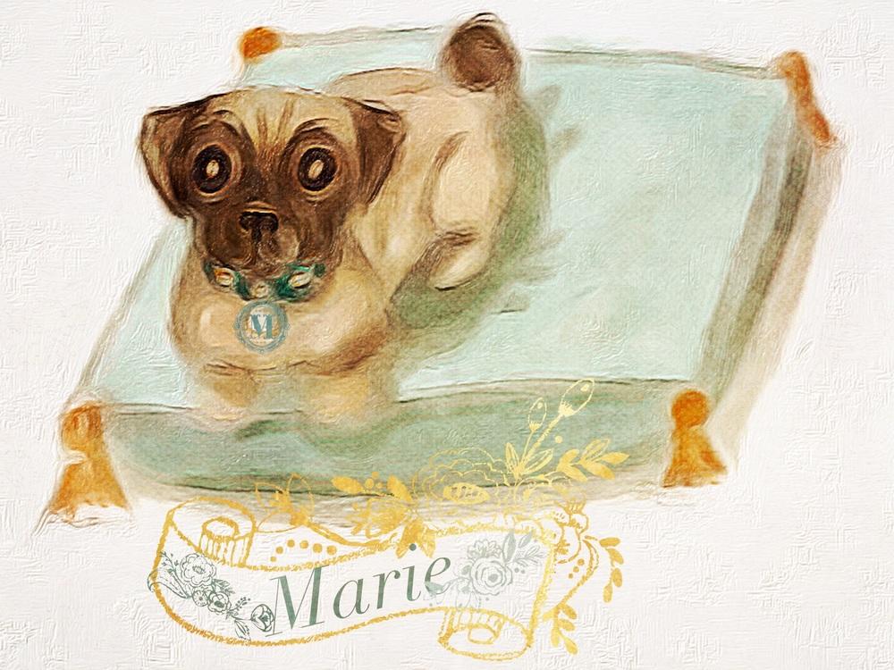 Marie the Pug