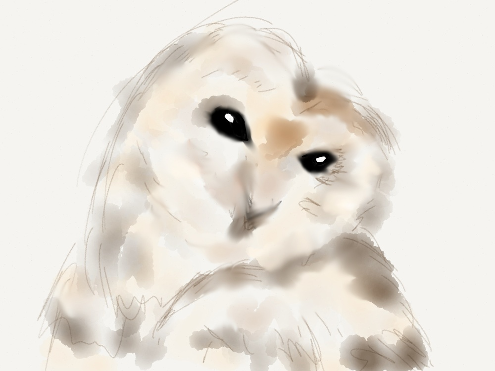 watercolor-owl.jpg