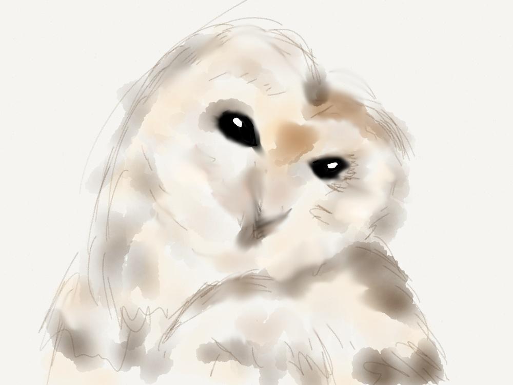 watercolor-owl.jpg