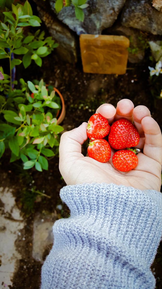 Best heirloom berries