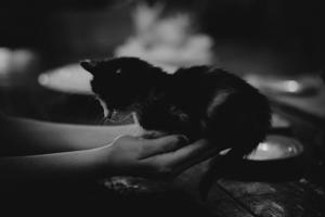Black and white kitten photo