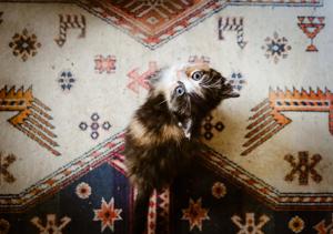 Calico kitten on boho rug