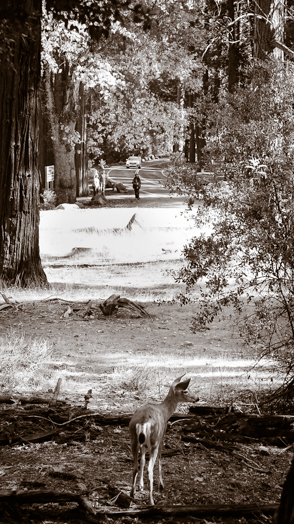 Menlo Park photographer