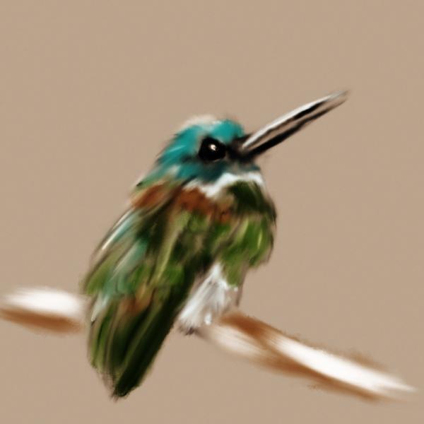 hummingbird-illustration.JPEG