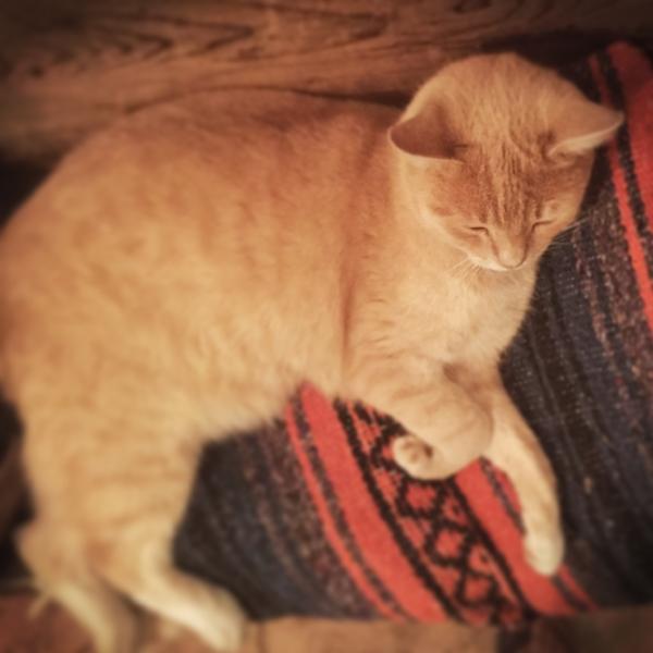 sleepy-kitten.JPG