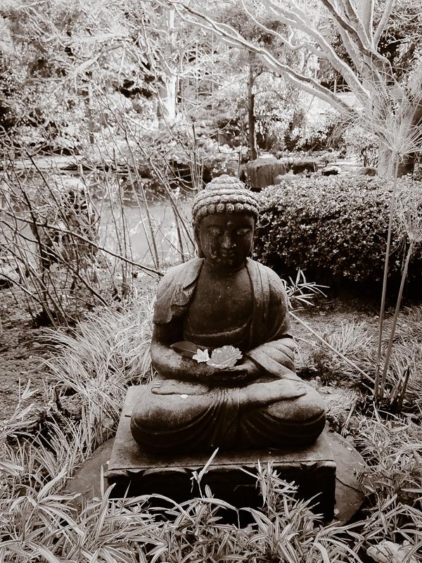 Iphone Photography Challenge at San Mateo Japanese Tea Gardens