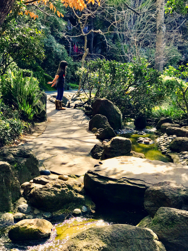 While you are wandering the  Japanese Tea Garden  you will find a little stream. My kids would spend hours having leaf boat races.  Menlo Park photographer
