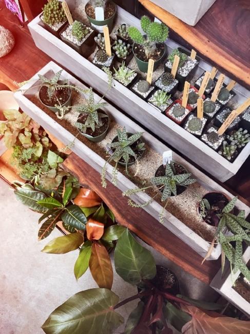 Houseplant Ideas