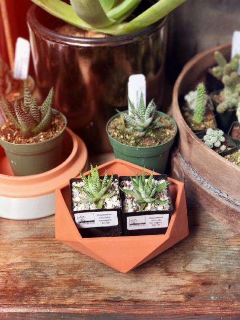 Natural Wedding Gift Ideas