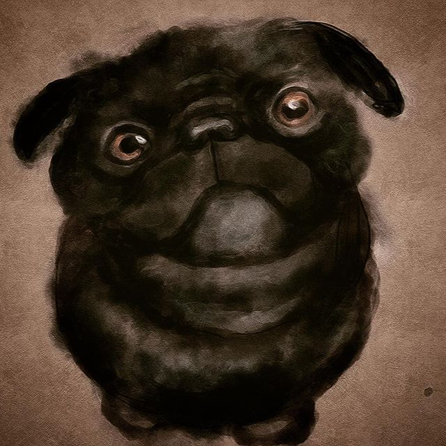 What do you mean I can't have your dinner? My cohost was teasing me today that I can't sit still I have to draw. So this is what I made while he was very carefully making the outline to todays episode (an outline I promptly ignored and created chaos. Poor Kyros=0) Here is the little black pug I drew while I was suppose to be researching. Procrastination and pugs might have to be the title of my autobiography. #pug #puglife #puglove #procrastination #dogslife #begging #dogportrait #petportrait #digitalart #dogstagram #instadog #pugstagram #dogoftheday  #pencil #drawings #digitalartist #thatsdarling #darlingmovement #thehappynow #childrensillustration #childrensbookillustration #kidsillustration #childrenswritersguild #childrensbookillustrator #traditionalart #illustratorsoninstagram #sketch_daily #worldofartists #traditionaldrawing #spoonie