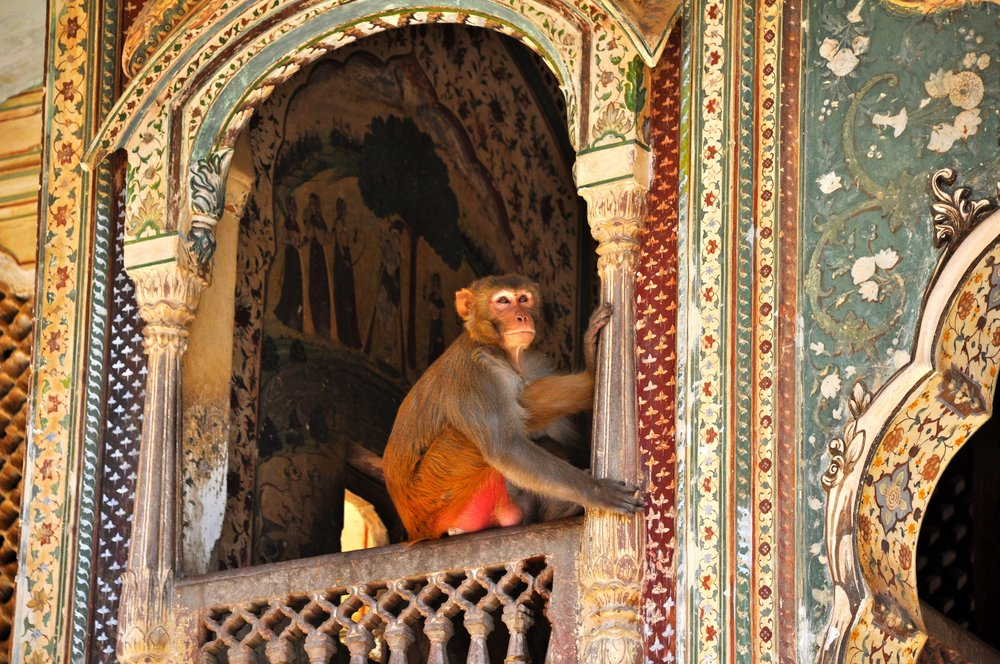 India+-+Ancient+Monkey+Temple.jpg