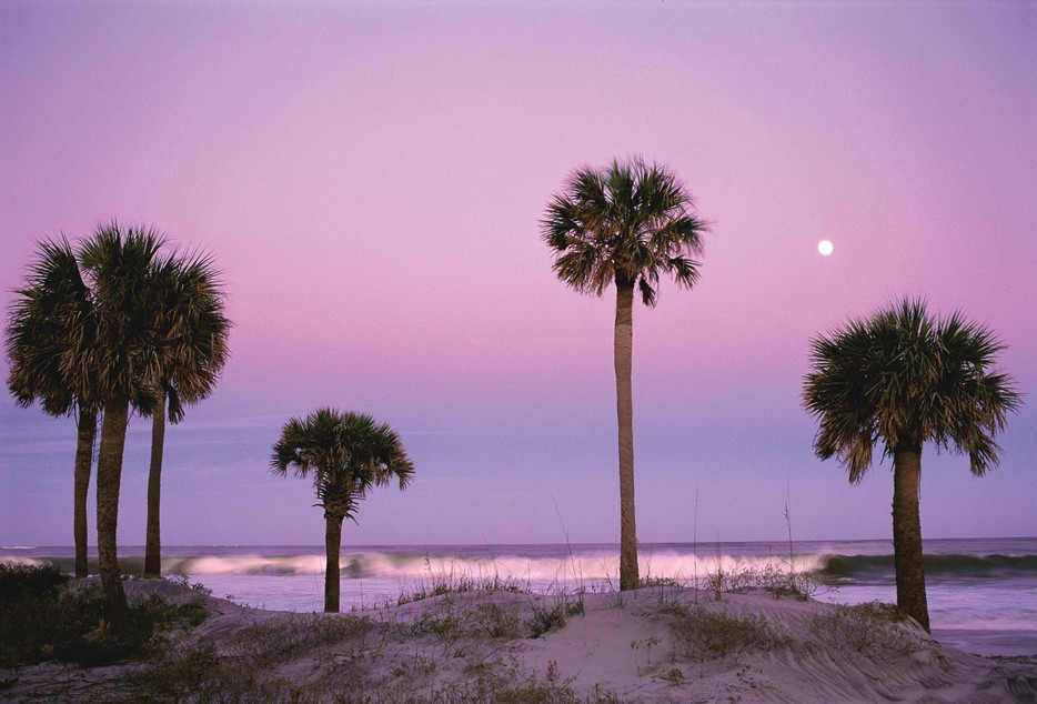 934_Palmetto_Moonrise.jpg