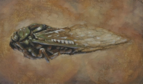 "Cicada II 7.5 x 11"" Oil on panel   2013"