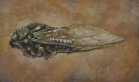 """Cicada II 7.5 x 11"""" Oil on panel  2013"""