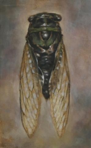 """Cicada I 7.5 x 11"""" Oil on panel  2013"""