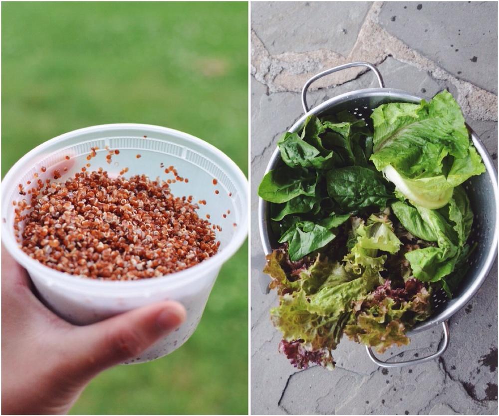 quinoa-lettuce.jpg