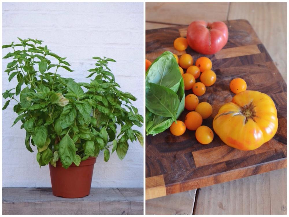 basil-tomatoes.jpg