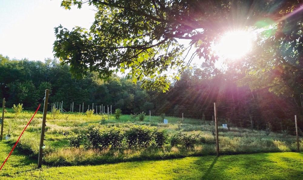 orchard-sunset.jpg