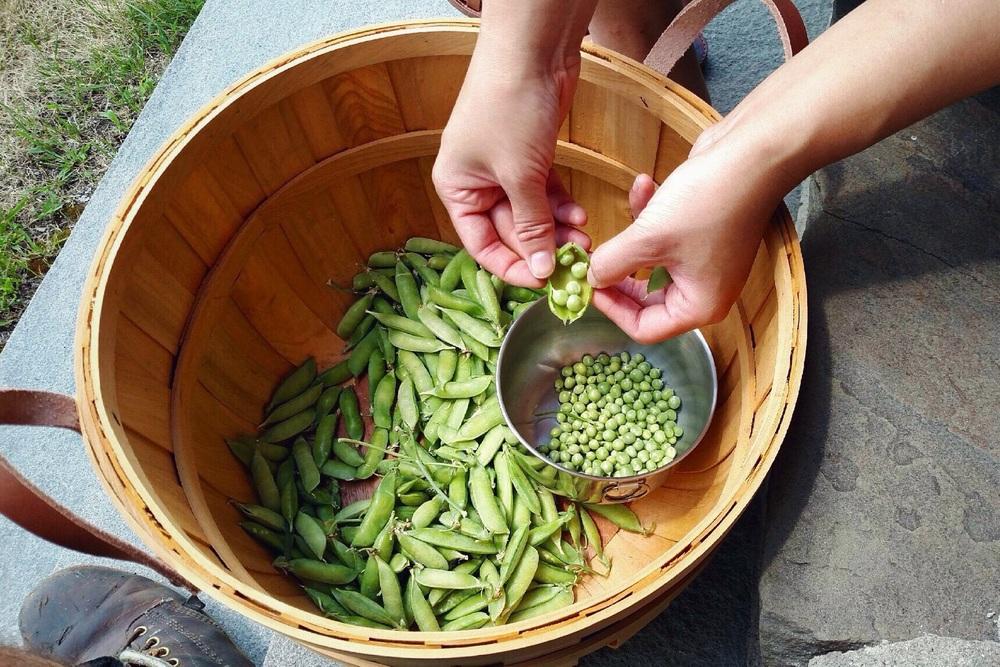 shelling-peas.jpg