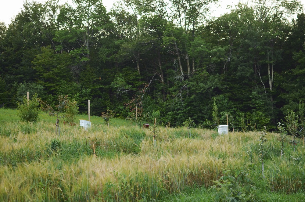 The hives in the (currently overgrown) orchard. Banana Stand (left), White House (right)