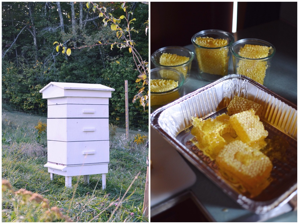 The White House (left), Harvesting Comb Honey (right)