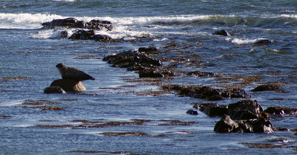 Seal 02.jpg